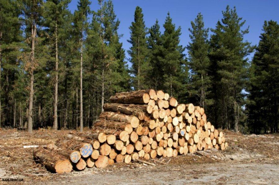 drva suma