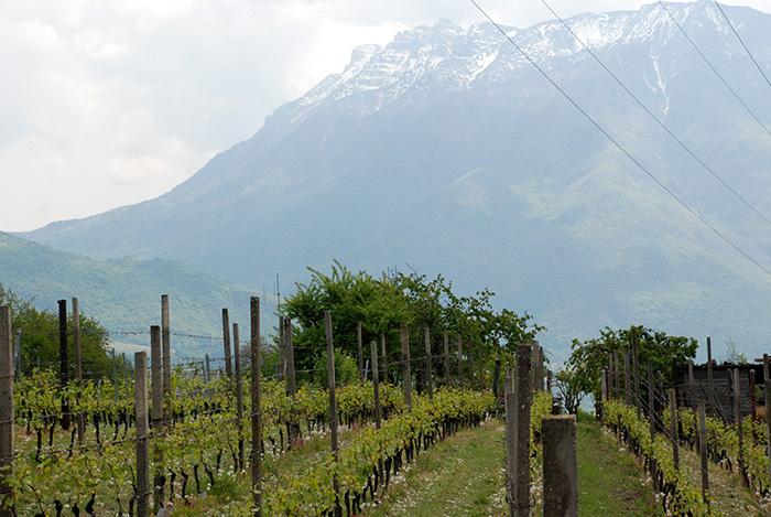 Trento - vrhunski razvijeno voćarstvo primjer na evropskom i svjetskom nivou