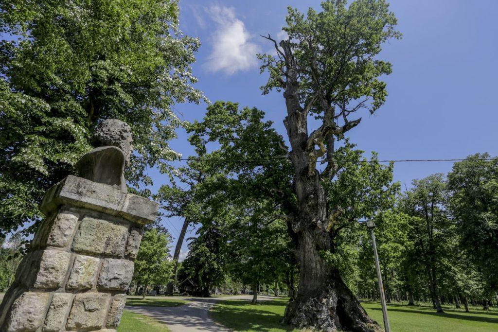 Kod Prijedora hrast star 600 godina: Spomenik kod kojeg su isprošene mnoge djevojkedjevojke