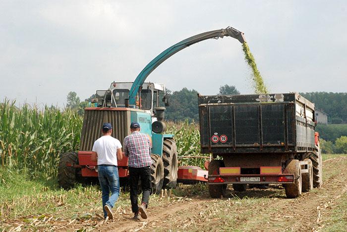 Godina s dobrim prinosom kukuruza